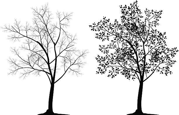 Two tree silhouettes in black on white background Illustration of tree silhouette. The archive consist of  EPS, PDF, SVG and hi-resolution JPG formats branch plant part stock illustrations