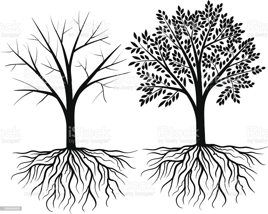 royalty free silhouette of a tree roots clip art  vector