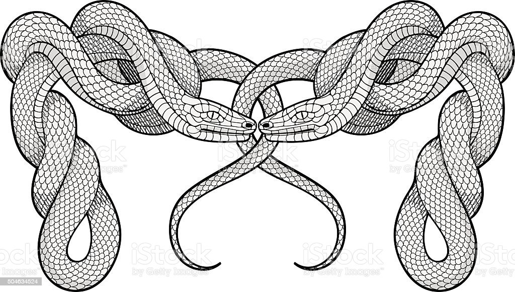 Two twisted snakes. Decorative element vector art illustration