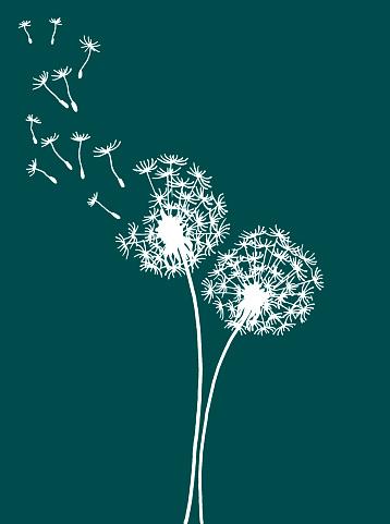 Two vector dandelions on green