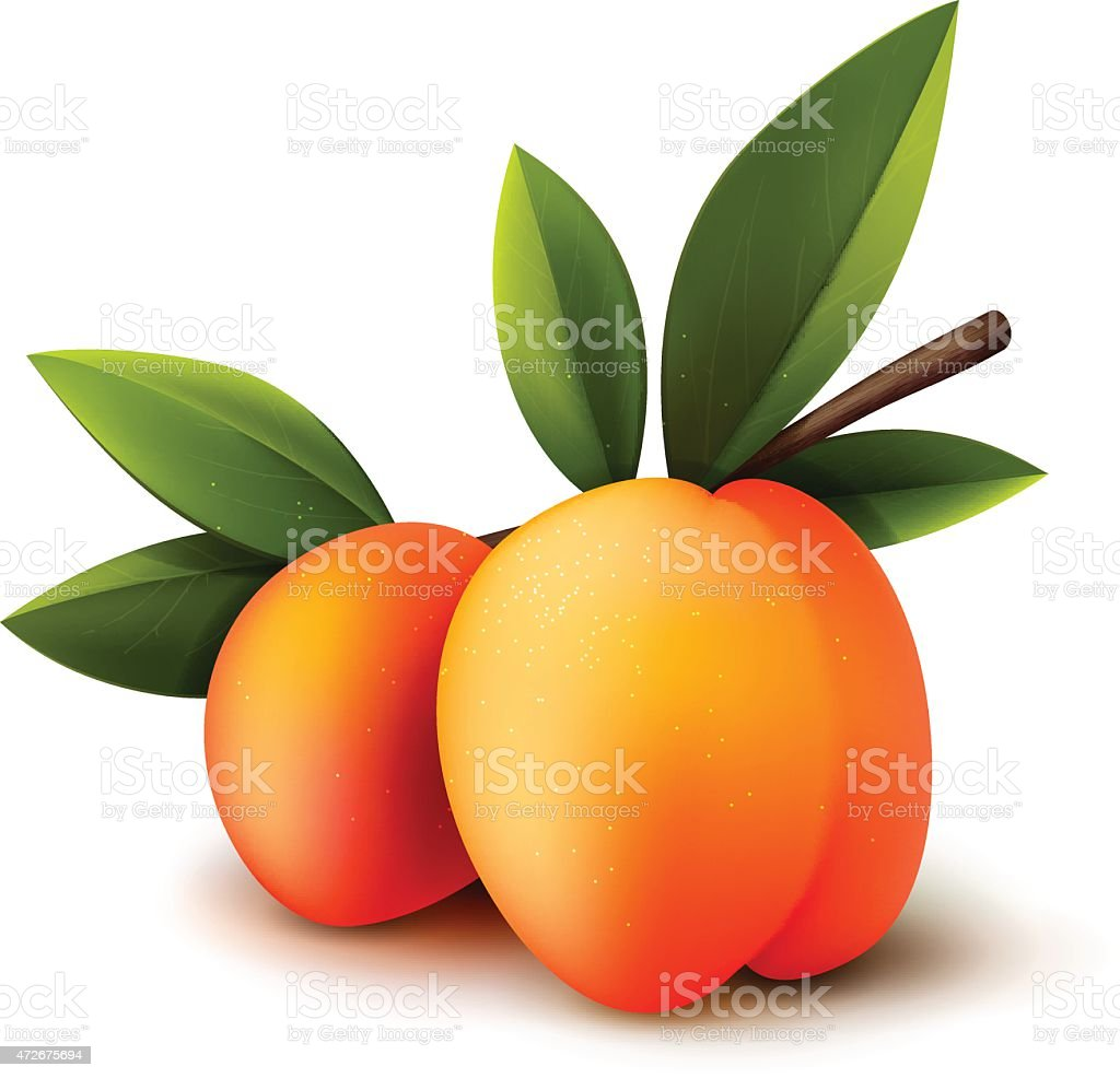 Two vector peaches vector art illustration