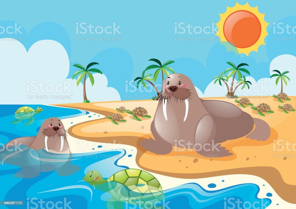 Two walrus on the beach royalty-free two walrus on the beach stock vector art & more images of animal