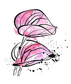 Two watercolor pink Calla Lily flowers on white background