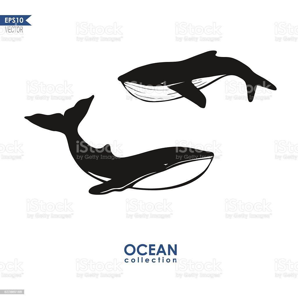 Zwei Wale isoliert auf Weiß – Vektorgrafik