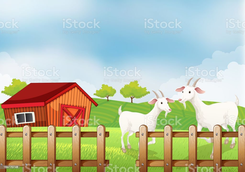 Two white goats at the farm royalty-free stock vector art
