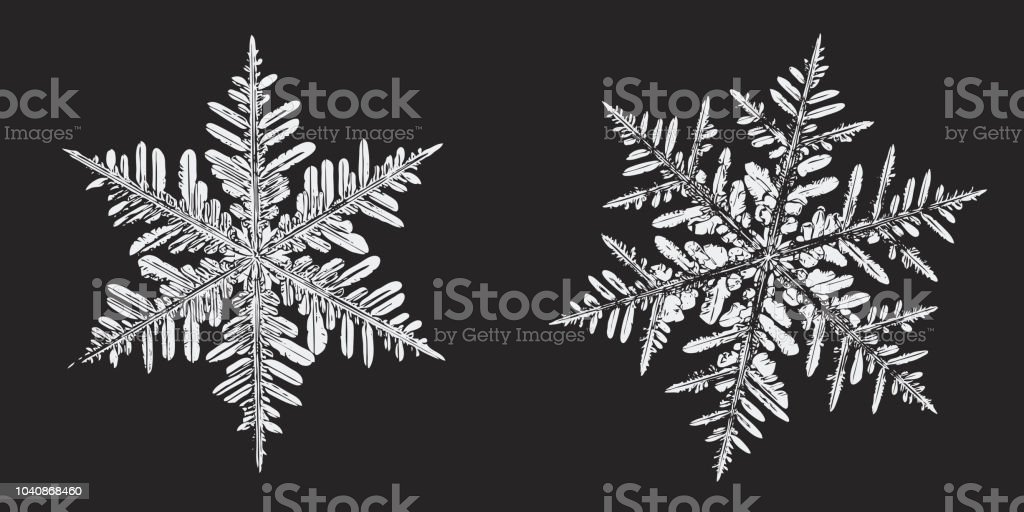 Two white snowflakes isolated on black background vector art illustration