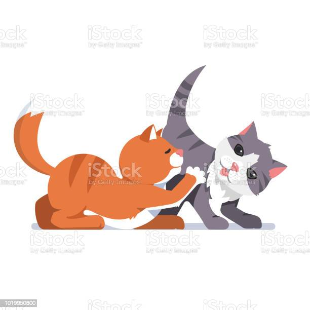 Two young cats grey and red play game together flat isolated vector vector id1019950800?b=1&k=6&m=1019950800&s=612x612&h=ktfy9btxqx39thoyhbbkbb0p avp c7klnho60lfn g=