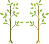 two young trees vector