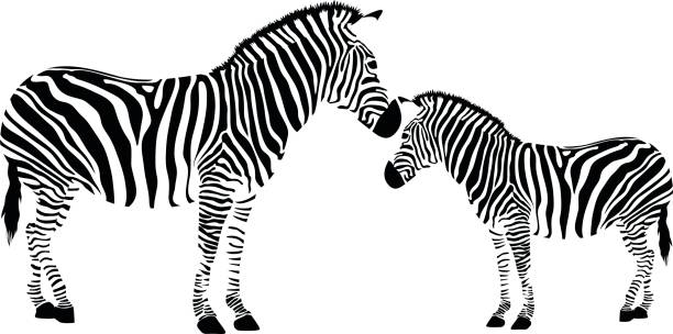 Royalty Free Zebra Clip Art, Vector Images & Illustrations