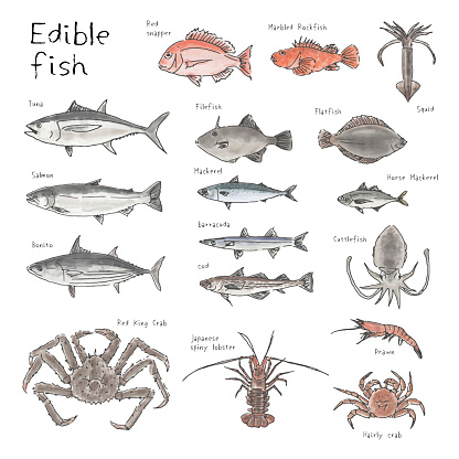 Type of edible fishes, hand drawn sketch watercolor illustration