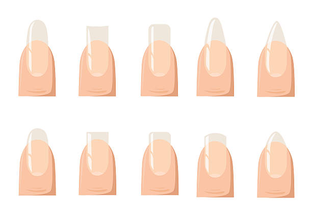 Types Of Fashion Different Nail Shapes