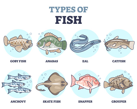 Types of fish as underwater wildlife species variety collection outline set