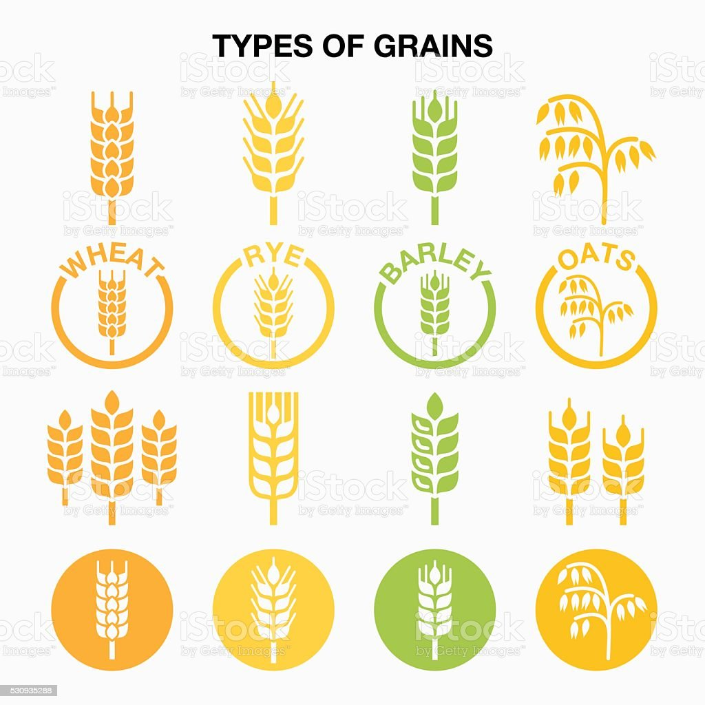Types of grains, cereals icons - wheat, rye, barley, oats vector art illustration