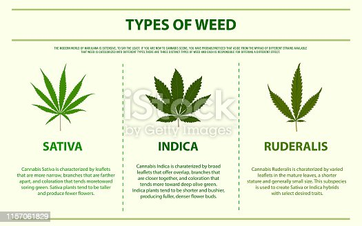 Types of weed horizontal infographic, healthcare and medical illustration about cannabis