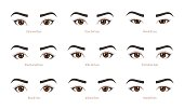 Various types of woman eyes. Set of vector eye shapes. Collection of illustrations with captions. Makeup type infographic. Different - close, protruding, hooded, almond, upturned on white background.