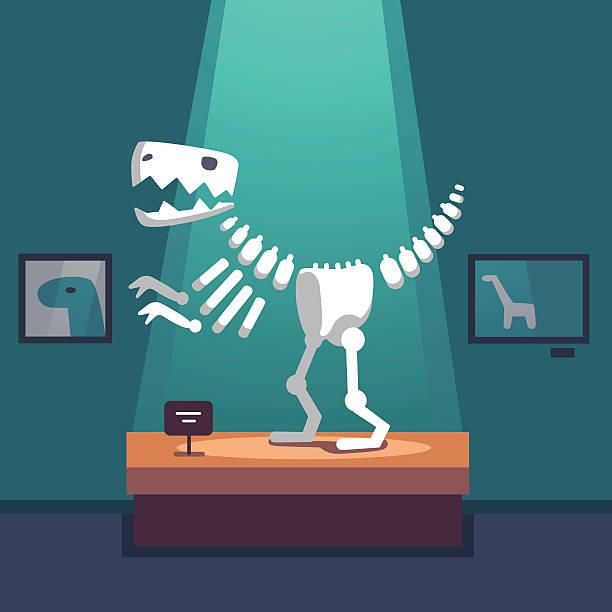 tyrannosaurus dinosaur skeleton at museum room - animal skeleton stock illustrations
