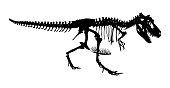 Tyrannosaurus Rex skeleton . Silhouette vector . side view
