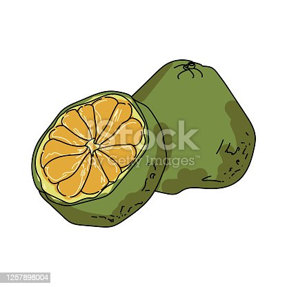Ugli Fruit Flat Vector Illustration. Cartoon Slices Of Exotic,.. Royalty  Free Cliparts, Vectors, And Stock Illustration. Image 129765507.