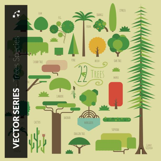 Ultimate trees collection vector art illustration