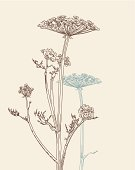 Umbellate plants with brown and beige shade