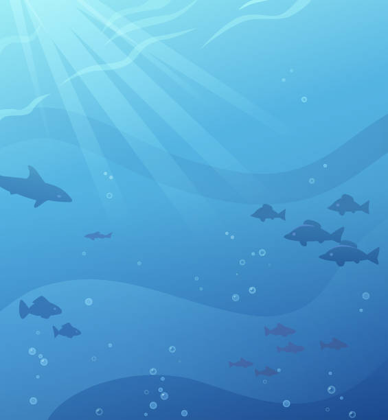 Undersea Background Undersea vector background with space for text. undersea stock illustrations