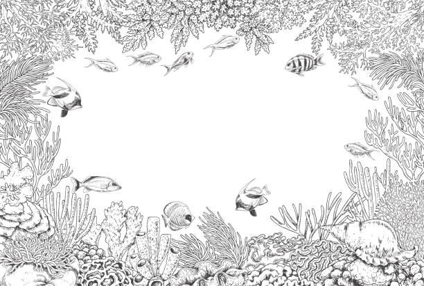 unterwasserhintergrund mit korallen und fischen - algen stock-grafiken, -clipart, -cartoons und -symbole