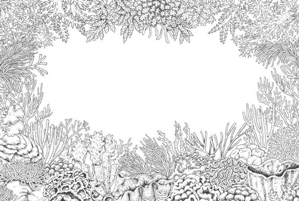 Best Great Barrier Reef Illustrations, Royalty-Free Vector ...