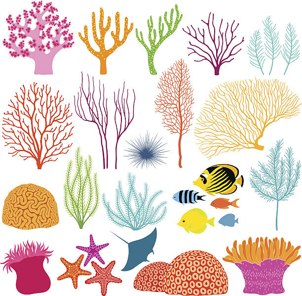 unterwasser-design-elemente - algen stock-grafiken, -clipart, -cartoons und -symbole