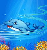 underwater dolphin
