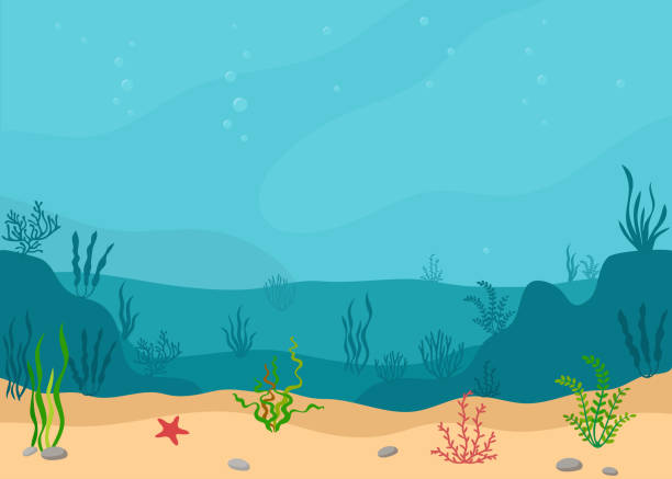 Underwater landscape with seaweeds. Panoramic seascape. Underwater landscape with seaweeds. Panoramic seascape. Vector illustration. at the bottom of stock illustrations