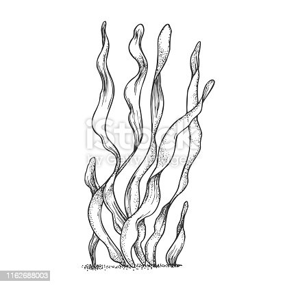 Underwater Organism Algae Seaweed Doodle Vector. Algae Organic Leaf Branch Exotic Spirulina Plant Ornamental Aquarium Decoration Concept. Designed In Retro Style Mockup Monochrome Illustration