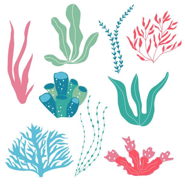 unterwasser-pflanzen, seepflanzen und korallen, set für stoff, textil, tapete, kinderzimmer, drucke, kindlichen hintergrund. vektor - algen stock-grafiken, -clipart, -cartoons und -symbole
