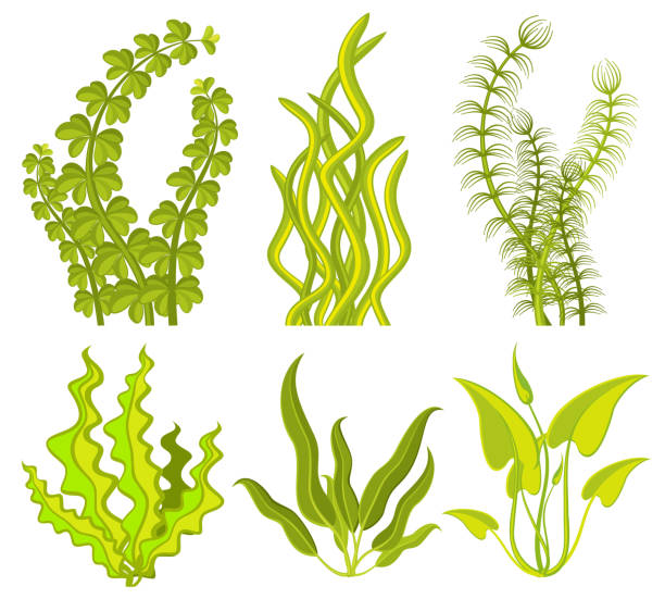 bildbanksillustrationer, clip art samt tecknat material och ikoner med underwater tång vector-element - sjögräs alger