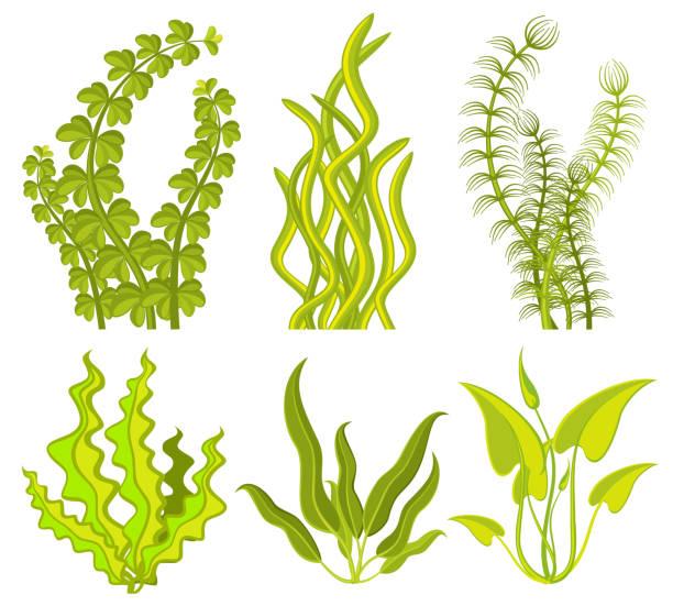 unterwasser seetang vektorelemente - algen stock-grafiken, -clipart, -cartoons und -symbole