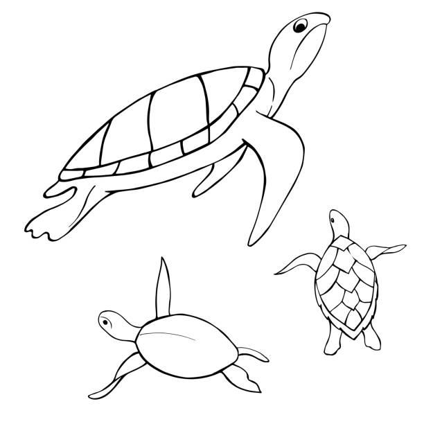Underwater turtle.  Vector sketch  illustration. Underwater turtle.  Vector sketch  illustration. amphibians stock illustrations