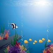 - tropical underwater background