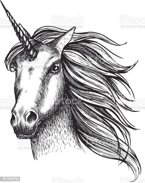 Unicorn horse vector sketch fairy tale animal head vector id972599762?b=1&k=6&m=972599762&s=612x612&h=b2knjtzuydrdh58yrpug9aedfwqcl3q8qnutymxhsrm=