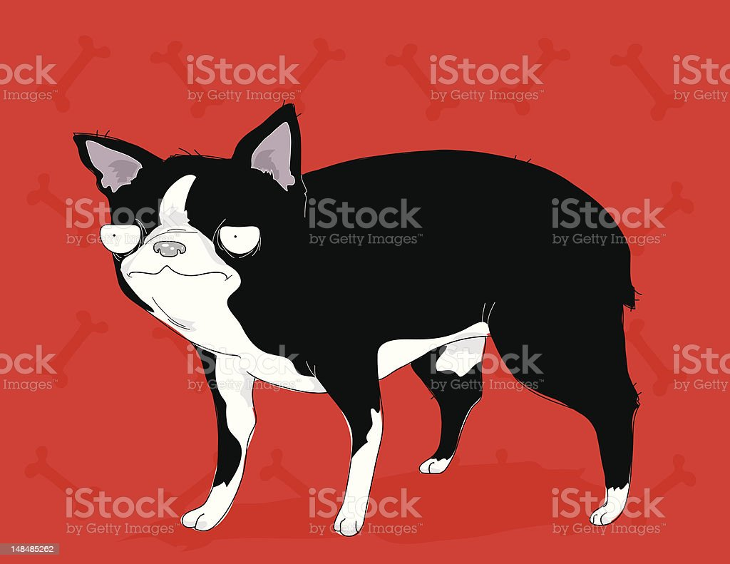Unimpressed Boston Terrier vector art illustration