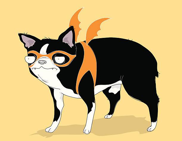 Unimpressed Halloween Boston Terrier vector art illustration