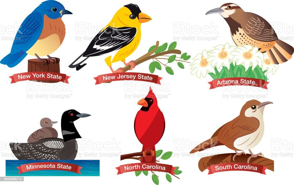 United States birds vector art illustration