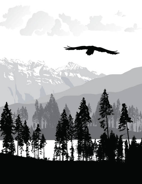 Untouched Wilderness Silhouette of an eagle flying over a valley in the Rocky Mountains bird clipart stock illustrations