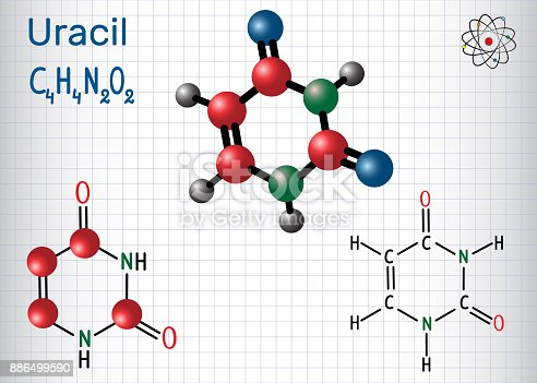 istock Uracil  (U) - pyrimidine  nucleobase in the nucleic acid of RNA. Structural chemical formula and molecule model. Sheet of paper in a cage 886499590