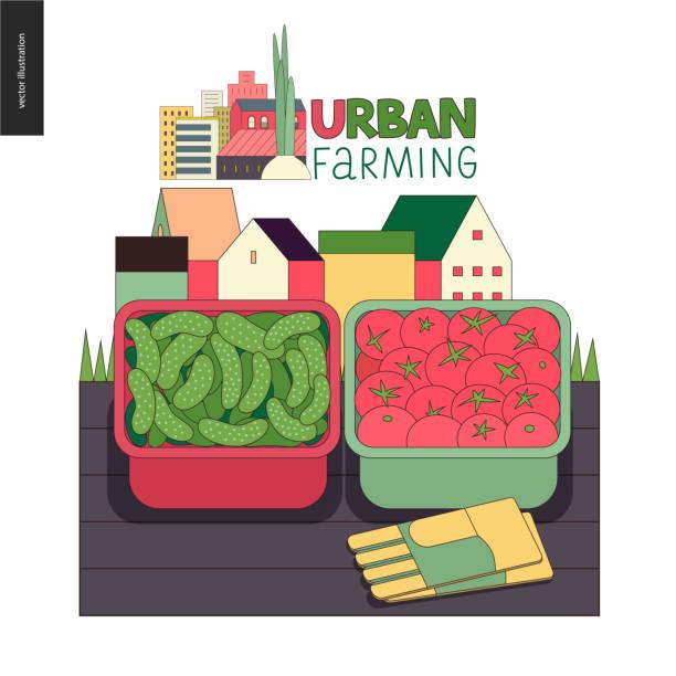 Urbane Landwirtschaft und Gartenbau - Gurken und Tomaten – Vektorgrafik