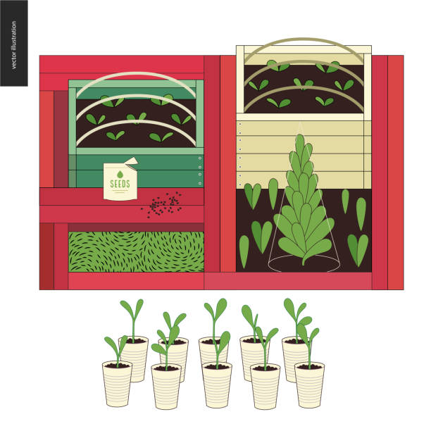 Urban farming and gardening - seedbeds Urban farming, gardening or agriculture. Few wooden seedbeds and cup pots with sprouts ready for planting out. urban gardening stock illustrations