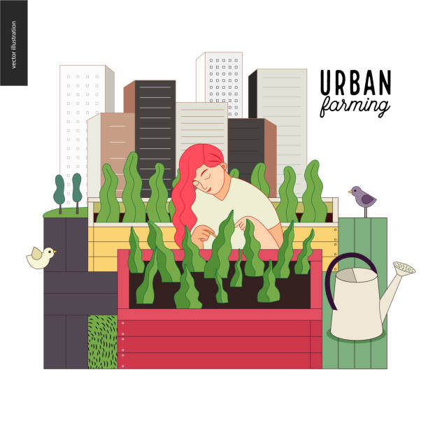 Urban farming and gardening Urban farming, gardening or agriculture. A woman looking after the plants growing in the wooden box, surrounded by gardening tools, with a city tower buildings on the background urban gardening stock illustrations