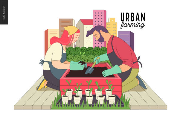 Urban farming and gardening Urban farming, gardening or agriculture. A man and a woman planting out the sprouts to the wooden package bed with a city tower buildings on the background urban gardening stock illustrations