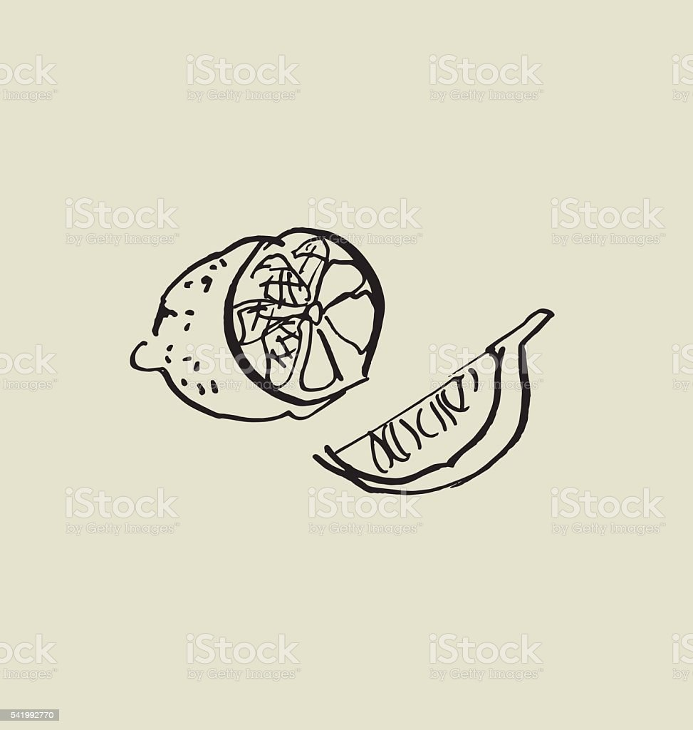 сut lemon image. food hand drawn sketch vector illustration. vector art illustration
