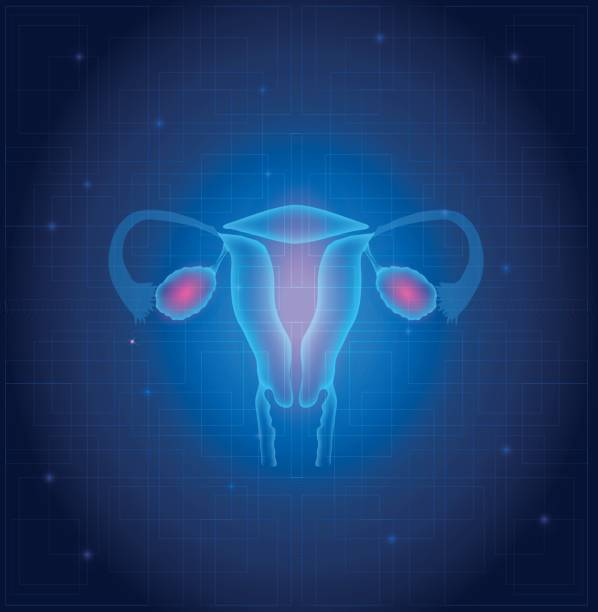 Uterus and ovaries anatomy Uterus and ovaries anatomy blue background fallopian tube stock illustrations