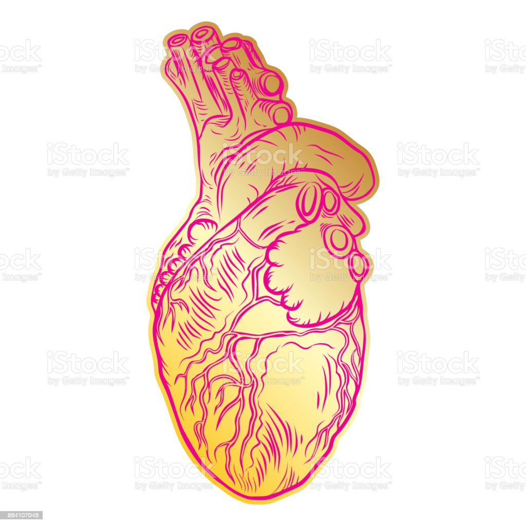 Día De San Valentín Corazón Humano Anatómico Imprimir En Concepto De ...