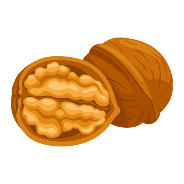 valnöt - nuts stock illustrations